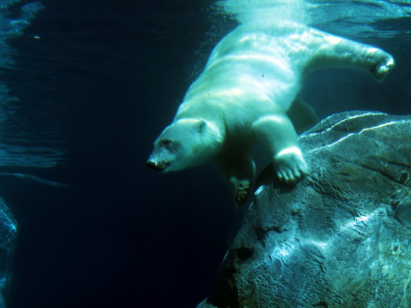 Journey to Churchill in Assiniboine Park Zoo
